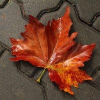 Позолотила осень :: Марина Щуцких