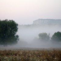 Туман :: Елена Куценко