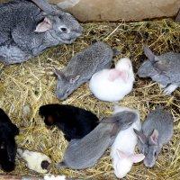 выводок кроликов :: Александр Прокудин