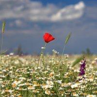 Жизнь в цвете :: Valery Penkin