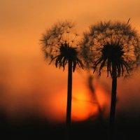 Встретить рассвет :: Valery Penkin