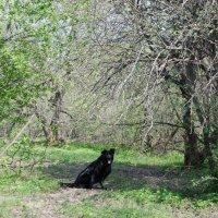 Собака весной :: Natalia Dubrovskaya