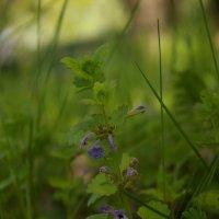 весна :: Алина Фомина
