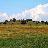 Весеннее поле 4 :: Марина Дегтярева