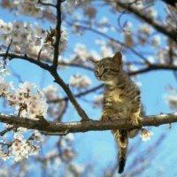 запахло весной! :: николай баулин