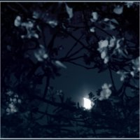 Майская ночь :: antip49 antipof