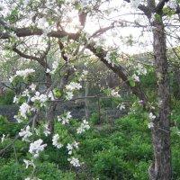 Весна :: Татьяна Постольник