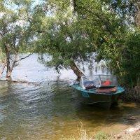 на  реке :: люба елесина