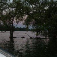 вечер  на  реке :: люба елесина