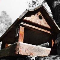 домик лесной) :: Дмитрий Седых