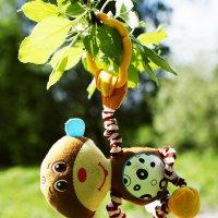 лесной житель, улыбчивый) :: Дмитрий Седых