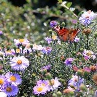 Butterfly :: Денис Маншилин