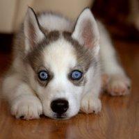 Собачье детство :: Valery Penkin