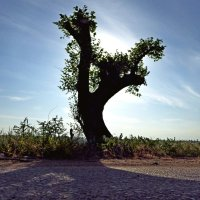 в тени дерева-мутанта. :: Александр Анатольевич