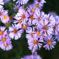 Цветочки :: Денис Маншилин