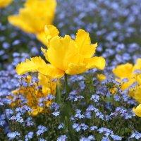 Городские цветы :: Larisa Ulanova