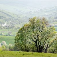 / Весна в Карпатах / :: Влад Соколовский