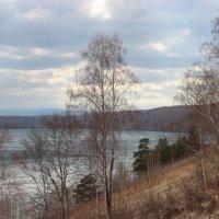 Сосновый берег оз. Инголь. :: Наталья Юрова