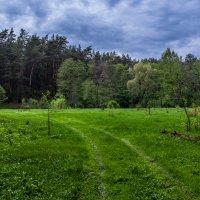 лес :: Оксана Богачева