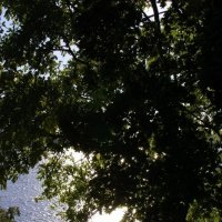 сквозь деревья :: Ольга Тупякова
