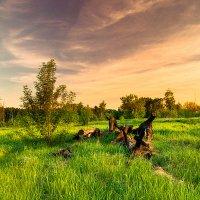 Закат в лесу :: Денис Голобородько