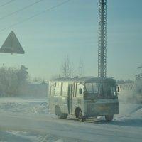 Морозное утро :: Анастасия Аничкина