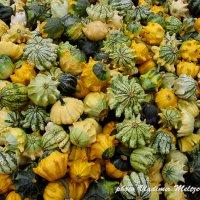 Осень,тыквы, Рига :: meltzer