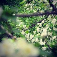Весна :: Валерий Обертас