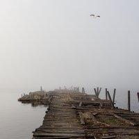 туманный май... :: Ирина Романова