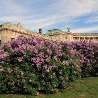 Весна в Вене :: Марина Воробьева