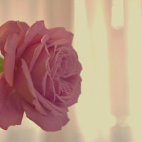 роза :: Nina Delgado