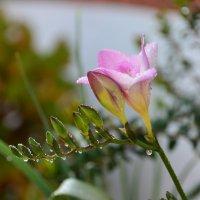 цветение :: Nina Delgado