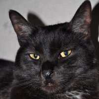 *Мой любимый кот Кузьма!!! :: Виталий Виницкий