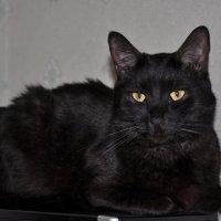 *Мой кот Кузьма!!! :: Виталий Виницкий
