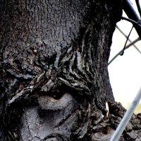 дух  дерева :: Дмитрий Потапов