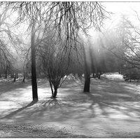 Туман :: Сергей Гайлит
