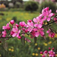 Пора цветения :: Валентин Яруллин