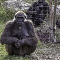 Зоопарк :: Natan Kigelman