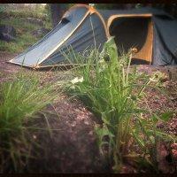 утро в лесу :: Анастасия Биковская
