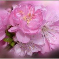 Нежность весны :: galina tihonova