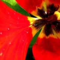 Цветы России :: Дмитрий Арсеньев