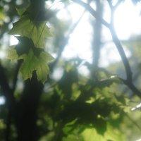 Природа :: Анна Иващенко