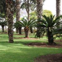 пальмовый парк :: alex chernyakov