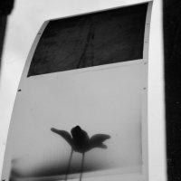 Пленка и цветочек :: Виктория Шорсткая