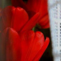 Тюльпаны :: Виктория Шорсткая