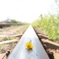 Цветок и сталь :: Руслан Бондарчук