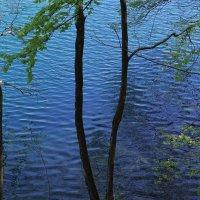 Плитвицкие озера, Хорватия :: Евгений Мусияченко