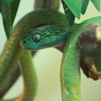 красивая змеюка :: Таня Глазунова