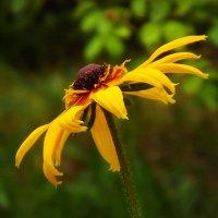 макро, цветы, :: valeriy g_g