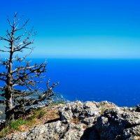 Деревцо, мечтающее о воде... :: Роман Ткаченко